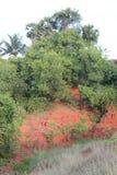 Sabbia rossa immagine stock