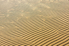 Sabbia sulle dune Fotografie Stock