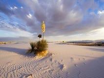 Sabbie bianche, New Mexico Immagine Stock Libera da Diritti