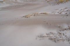 Sabbie della spiaggia nelle dune fotografia stock