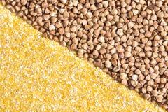 Sabbie di cereale e fondo del grano saraceno Fotografia Stock Libera da Diritti