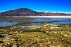 Sabbioso ed inghiai la strada del deserto attraverso la parte a distanza di Altiplano del sud, Bolivia Fotografie Stock