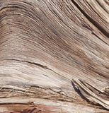 Sabedoria na madeira resistida Imagem de Stock Royalty Free