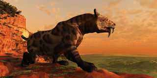 Saber-Tooth Cat 01 Stock Photo
