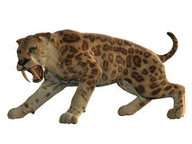 Saber-Tooth Cat Angry Royalty Free Stock Photos