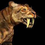 Saber-tooth Cat on Black Royalty Free Stock Photography