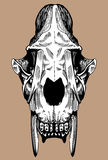 Saber Tooth Cat Skull. Hand drawn image of a saber tooth cat skull Stock Photo