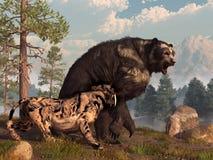 Saber Tooth contre l'ours fait face court illustration libre de droits