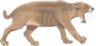 Saber tooth tiger Stock Image