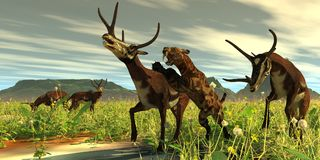 Kyptoceras attacked by Saber-toothed Cat Stock Image