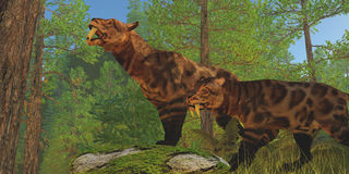 Saber-Toothed Cat Forest. Two Saber-Toothed Cats in the Eocene Age look for their next prey in a pine forest Royalty Free Stock Photo