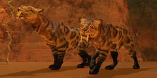 Saber-Toothed Tiger Cave. Two Smilodon cats find protection in a vast cave system in the Eocene Era Stock Photography