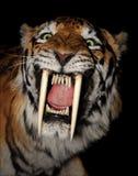 Saber-toothed tigerframsida Arkivbilder