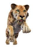 Sabertooth, животное на белизне Стоковое фото RF