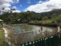 Sabeto-Schlamm-Poolheiße quelle mit Besuchermenge nahe gelegenes Nadi, Fidschi mit Gebirgshintergrund stockfoto