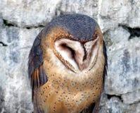Sabiduría animal Fotos de archivo