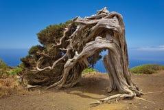 Sabina. In El Hierro. Canary Islands Royalty Free Stock Photos