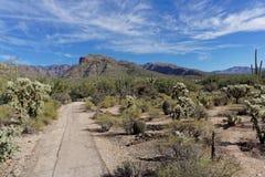 Sabino峡谷沙漠 库存图片