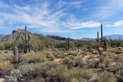 Sabino峡谷沙漠 免版税图库摄影