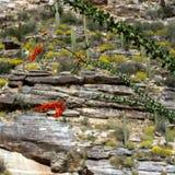 Sabino峡谷 库存图片