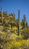 Sabino Canyon Immagini Stock