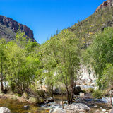 Sabino Canyon Photos libres de droits