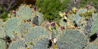 Sabino Canyon fotos de archivo