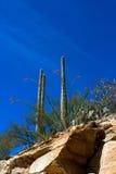 Sabino Canyon imágenes de archivo libres de regalías