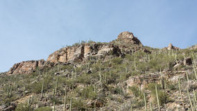 Sabino Canyon Royalty Free Stock Image