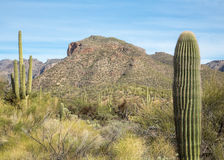 Sabino Canyon Royalty Free Stock Images
