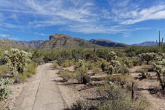 Sabino Canyon Desert Immagini Stock