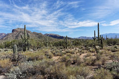 Sabino Canyon Desert Photographie stock libre de droits