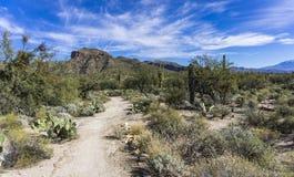 Sabino Canyon Desert Royalty-vrije Stock Afbeeldingen