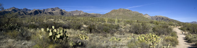 Sabino Canyon (panoramic) Stock Image