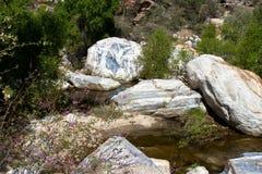 Sabino Canyon Royalty Free Stock Photography