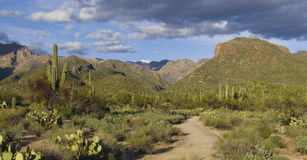 Sabino Canyon Trail Stock Photo