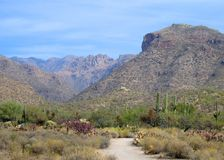 Sabino Canyon Trail Stock Photography