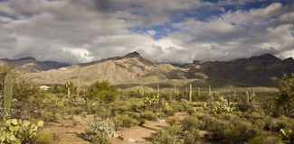 Sabino Canyon Trail. In Tucson, Arizona Royalty Free Stock Photography