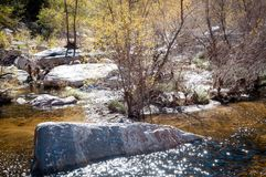 Sabino creek running through the rocks and trees Stock Photo
