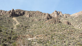 Sabino Landscape Stock Photo