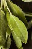 Sabio orgánico verde crudo Fotografía de archivo