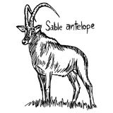 Sable antelope - vector illustration sketch hand drawn with blac. K lines, isolated on white background Royalty Free Stock Photos