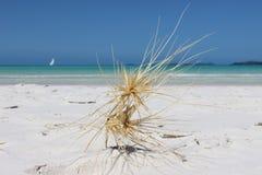 Sable blanc devant l'océan photographie stock libre de droits