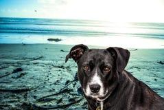 Sable bleu de ciel de plage de chien Images stock