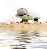 sable d'echinus Image libre de droits