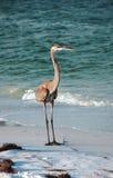sable d'oiseau marchant dans l'eau Photos stock