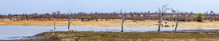 Sable dam landscape in Kruger National park, South Africa Royalty Free Stock Photo