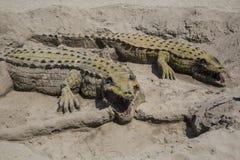 Sable de crocodile en Andalousie Images libres de droits