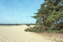 Sable de dérive dans le zand de Mosselse de réserve naturelle photos stock