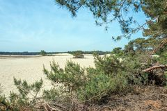 Sable de dérive dans le zand de Mosselse de réserve naturelle photos libres de droits